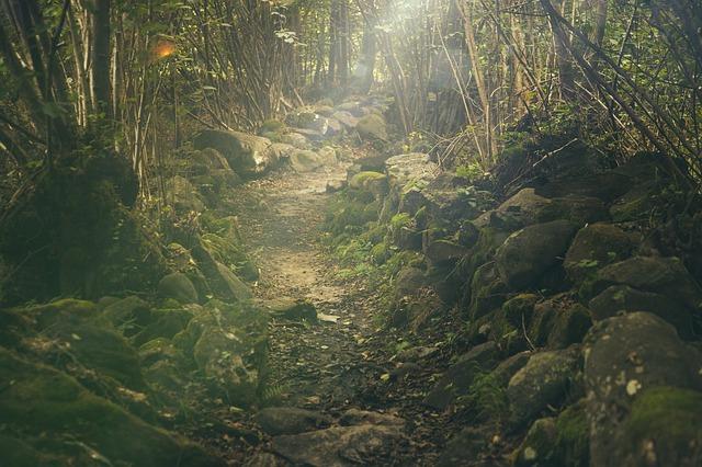 תמונה של יער צרעה